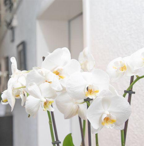 Zahnärzte Datteln - Blumen Wartezimmer