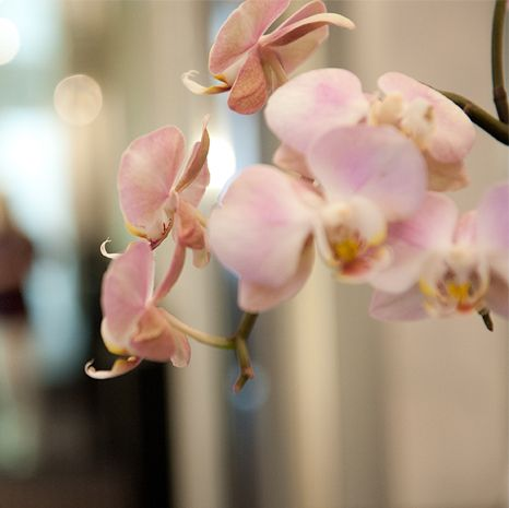 Zahnärzte Datteln - Orchidee - Praxis